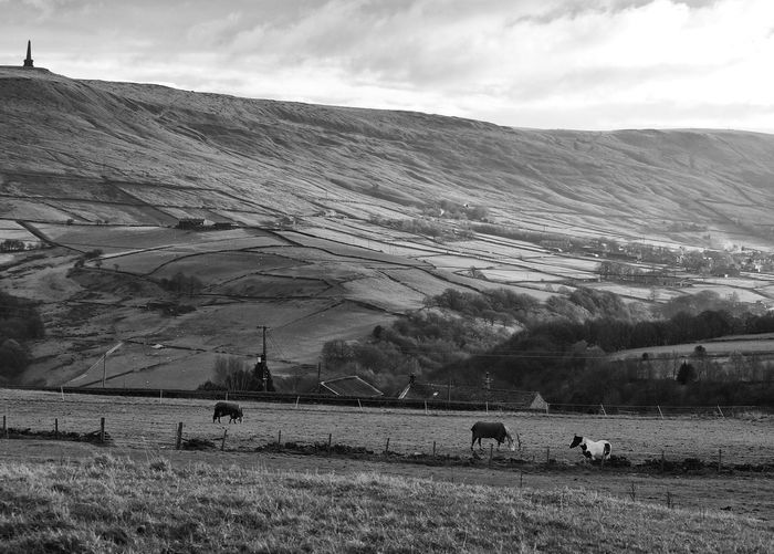 Beauty In Nature Cloud Cloud - Sky Cloudy Day Field Grass Grazing Hill Horse Idyllic Landscape Leisure Activity Mountain Mountain Range Nature Non-urban Scene Outdoors Remote Rural Scene Scenics Sky Todmorden Tranquil Scene Tranquility