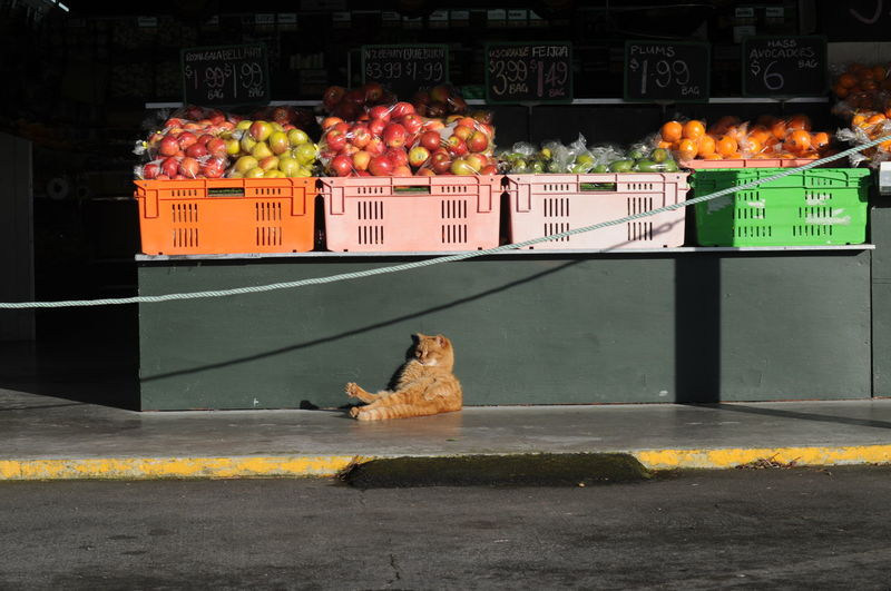 Dont Care  Animal Animal Themes Cat City Container Day Domestic Domestic Animals Feline Food Food And Drink Freshness Fruit Photography Guard Cat Guarding Healthy Eating Mammal Market No People One Animal Pets Retail  Retail Display Sale Vertebrate