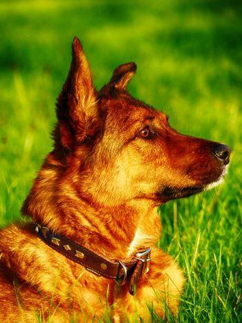Dingo passt auf!