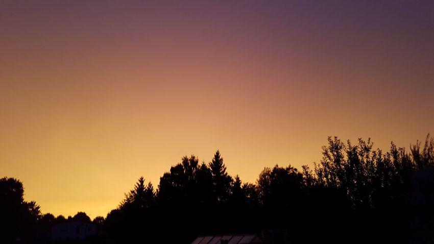 Sunset Outdoors Tree Nature Sky Buttenwiesen