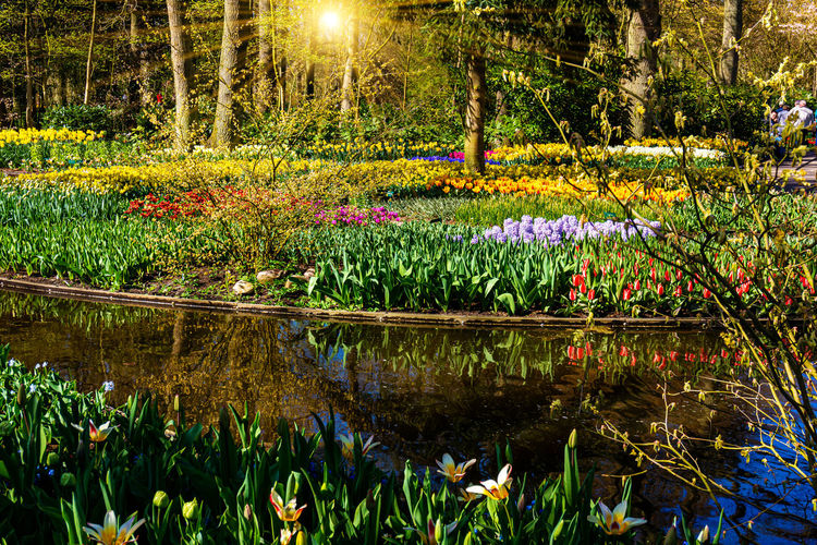 Scenic view of lake by plants in park