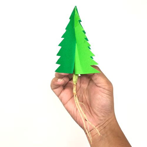 Paper cut in Christmas tree shaped with a root of coriander in the caucasoid adult hand over the white background. Caucasoid Human Hand Hand Human Body Part Green Color Studio Shot Leaf Plant Part White Background Holding One Person Indoors  Copy Space Creativity Close-up Body Part Art And Craft Finger Human Finger Nature