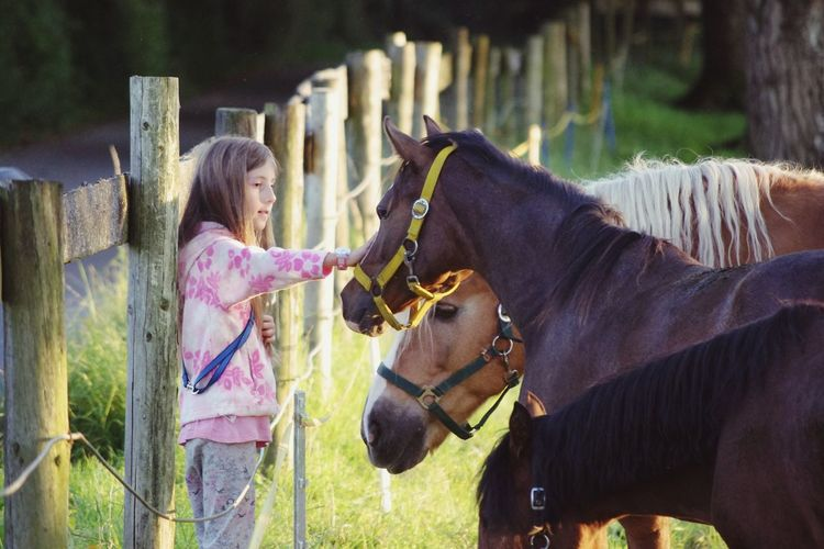 Girl stroking horses Candid Women Mammal Domestic Animals Girls Females Domestic One Person Day Real People Child Livestock Childhood Lifestyles