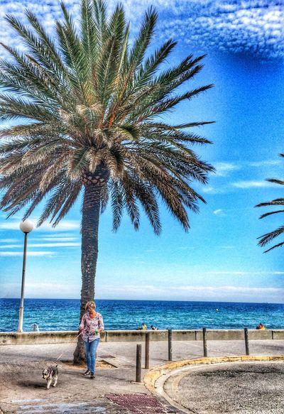 A la sombra de la palmera. Hello World Hi! Relaxing