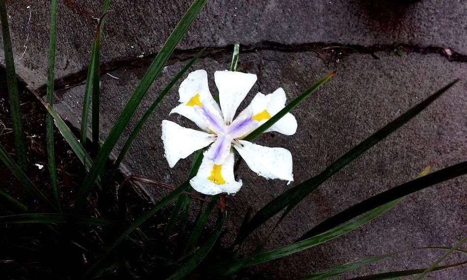 High Angle View Fragility Flower Head Flower Beauty In Nature Growth Nature Close-up Grass Due EyeEmNewHere