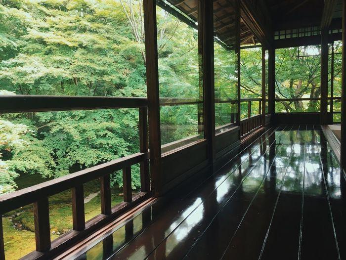 Japan. Tree
