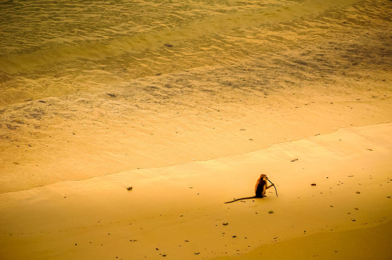 High angle view of monkey on beach