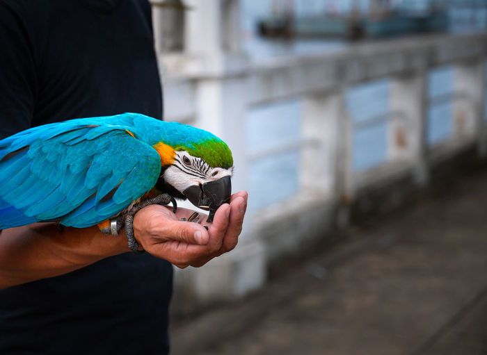 Midsection of man holding bird perching on hand