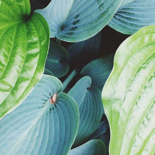 Green Garden Gardening Flowers,Plants & Garden Botanical Plants
