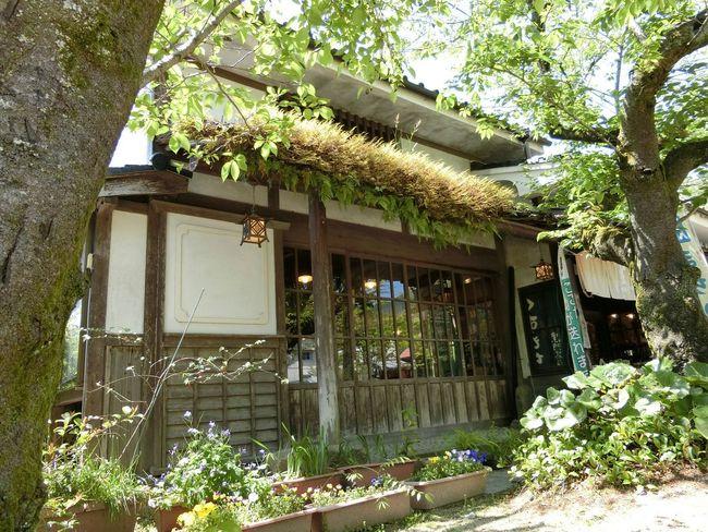 小京都 茶屋 Tree Cafe
