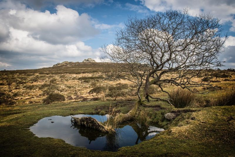 Dartmoor landscape Dartmoor National Park Devon Uk Moorland Wilderness Dartmoor Sky Cloud - Sky Plant Water Tranquility Beauty In Nature Nature Tree Tranquil Scene No People Scenics - Nature Growth Day Reflection Land Outdoors Non-urban Scene Environment Landscape