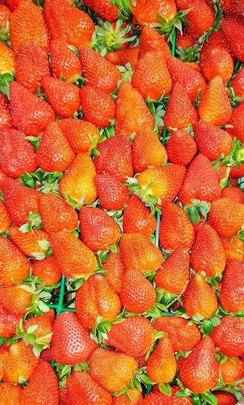 Louisiana strawberries Strawberries Strawberry Fruit Food Freshness Fresh Fruits Healthy Eating Healthy Food Juicy Red Red Color Berries Large Group Of Objects Louisiana Louisiana Flood Louisiana Strawberries Cooking Fresh Picked Ripe Ripe Fruit Good Food Berries Collection Foodporn Foodphotography Backgrounds Fruit Full Frame Red Close-up Food And Drink