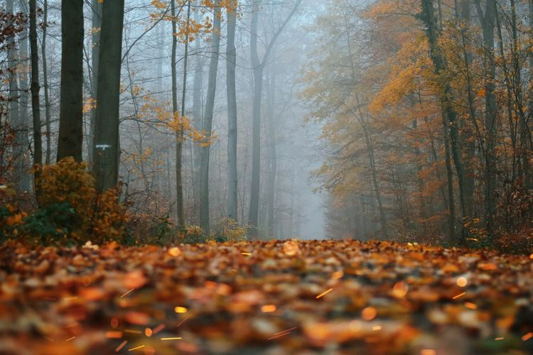 Surface level of trees in forest during autumn