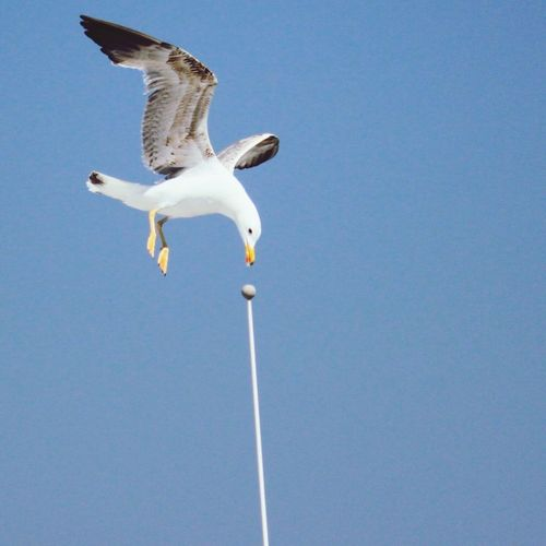 Low angle view of seagull flying over pole against sky