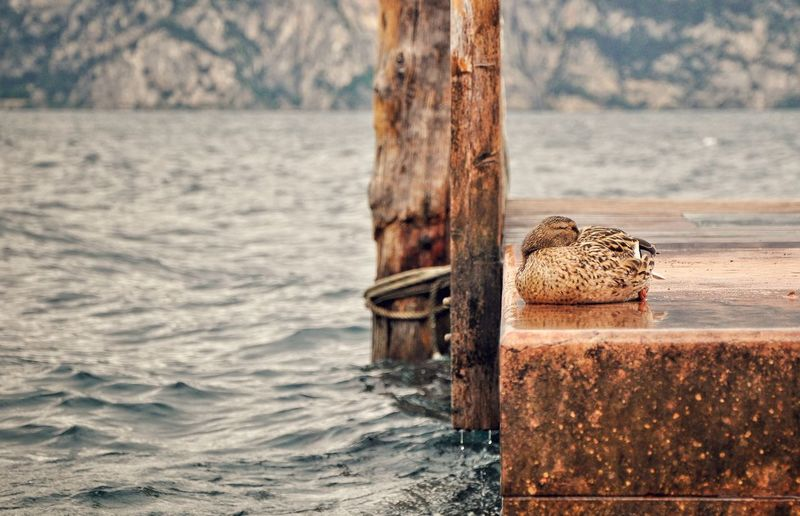 Wooden post in a sea
