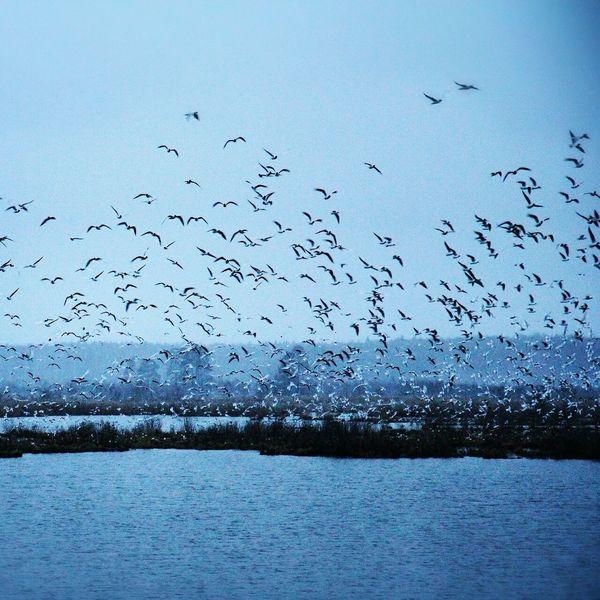 подмосковье мытищи поселок водокачка Яуза Лосиноостровский заповедник Природа птицы Королёв Fly Nature
