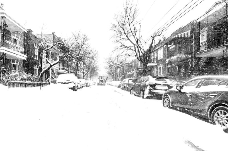 After the storm comes a calm White Color White Background Wide Angle Cityscape Quebec Canda Streets Storm Photography Streetphoto_bw EyeEm Best Shots - Black + White Photojournalism Blackandwhite FUJIFILM X-T2 Fujifilm_xseries Streetphotographers Fujifilm Blackandwhite Photography Streetphotography_bw Winter Snow Tree Cold Temperature Snow Winter Sky Plant Nature Tranquility Outdoors