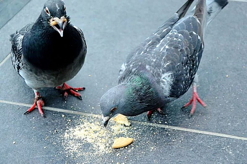 Photography Birds Eating