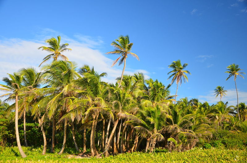 View Of Palm Trees Against Sky