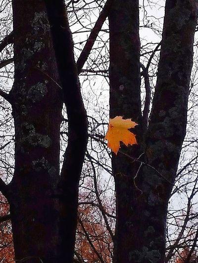 Leaf Leafs