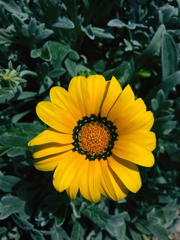 Art Is Everywhere Flower Yellow Petal Plant Flower Head Nature Fragility Freshness Beauty In Nature Sunflower No People Outdoors Day Tagsforlikes Followme Likeforlike Like4like I'm In Love Taking Photos Chilling Beautiful EyeEm Nature Lifestyles
