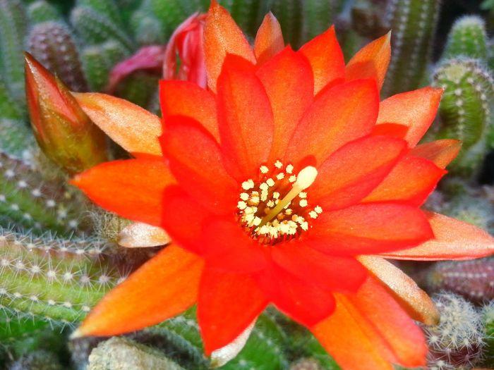 Cactus Cactus Flower Flower Hi! Hello World Nature Türkiye