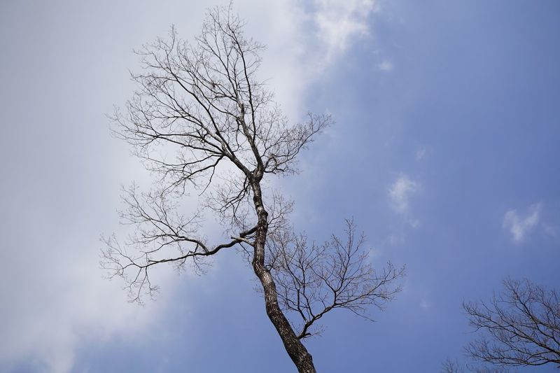Sky And Clouds Bare Tree Branch Low Angle View Beauty In Nature Nature Sky Tranquility Outdoors