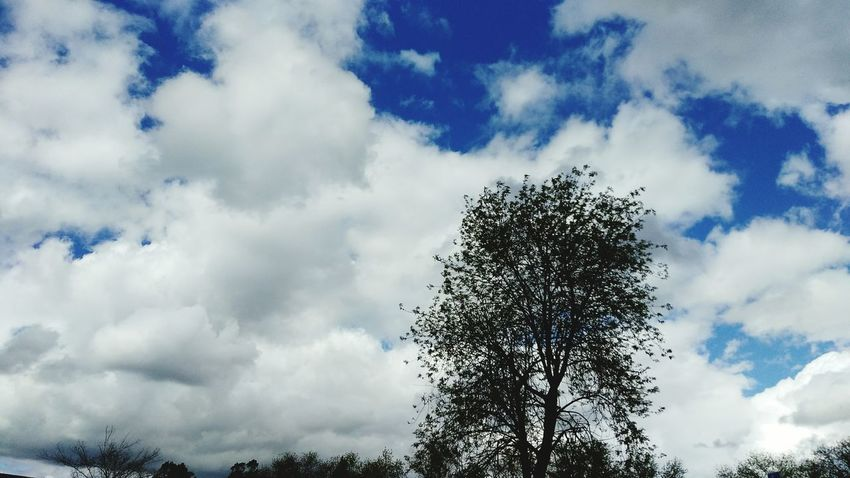 Cloud - Sky Tree Sky Low Angle View Beauty In Nature Nature No People Tranquility Day Outdoors Dramatic Sky Nor Cal Smartphone Photography Sacramento, California ( USA ) Tranquility Smart Phone Photographer From My Point Of View CaliLife Norcal Clear Sky Blue Bare Tree