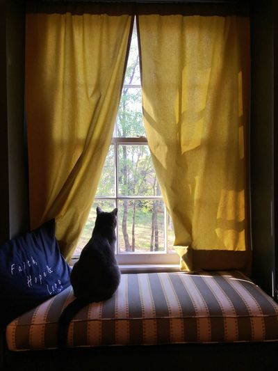 Contemplating cat life.