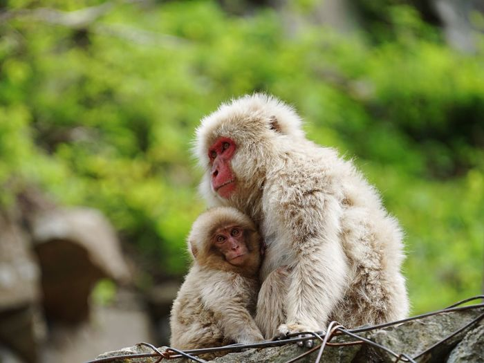 Close-up of two monkeys