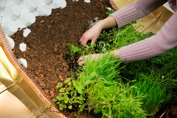 Cropped image of gardener hands planting seedlings in yard
