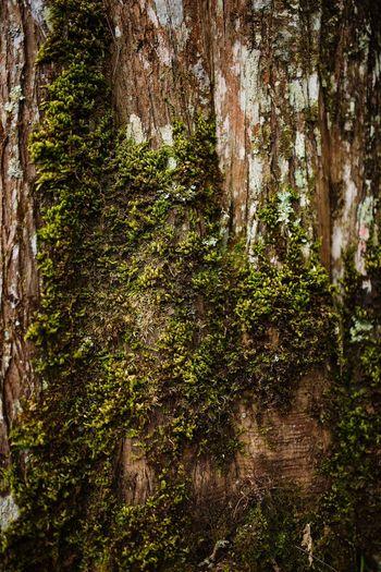 Tree textrue