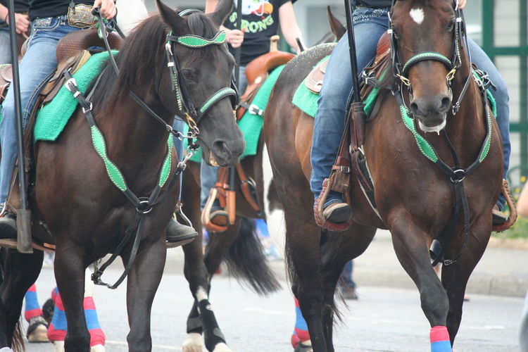 Low section of people riding horses at street on fourth of july independence day parade