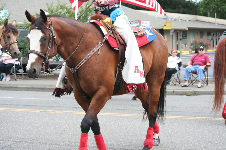4th Of July 2016 4th Of July Parade Casual Clothing Celebration City Life Day Focus On Foreground Horse Leisure Activity Lifestyles Mammal Outdoors Patriotism Road Working Animal Adapted To The City