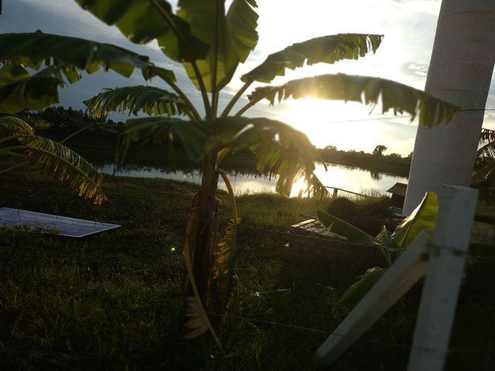 Tree Water Palm Tree Sky