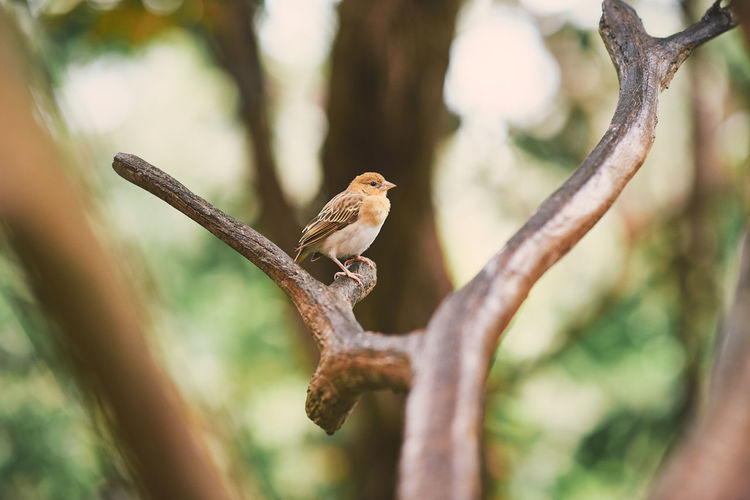Jurong Bird Park Animal Themes Animal Wildlife Animal Animals In The Wild Vertebrate Tree Bird One Animal Branch Perching Plant Focus On Foreground No People Nature Day Selective Focus Outdoors Beauty In Nature Close-up Zoology