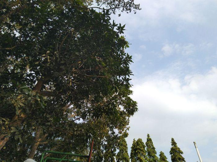 Bokeh Sun Leaf