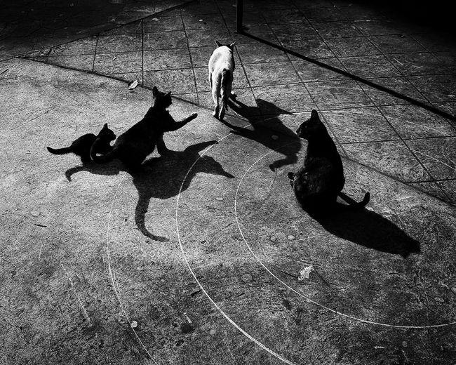 High angle view of dog walking on street