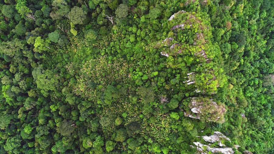 An overhead shot of green rain forest in Asia. Aerial, Tree, Landscape, Background, Nature, View, Green, Outdoor, Park, Forest, Land, Environment, Field, Season, Country, Travel, Beautiful, Scenery, Hill, Drone, Mountain, Panoramic, Above, Jungle, Woods, Destination, Tropical, Horizon, Wild, Breathtak Beauty In Nature Close-up Day Forest Fragility Freshness Fungus Green Color Growth Leaf Lichen Moss Nature No People Outdoors Plant Tranquility Tree