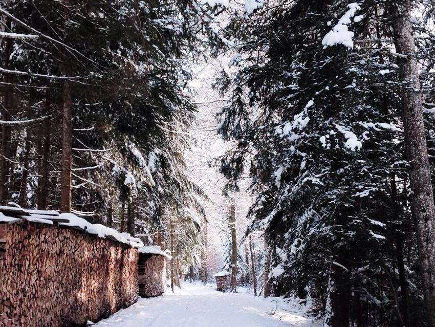 Winter Neige❄ Nature Hello World Trees Snowing