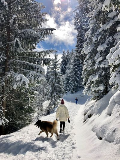 Rear view of woman and dog on snow covered land in forest