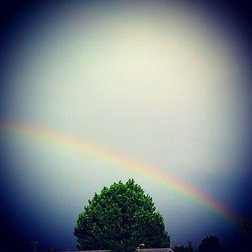 Rainbow,blue sky,rainny days,summer,middle tree,colorado