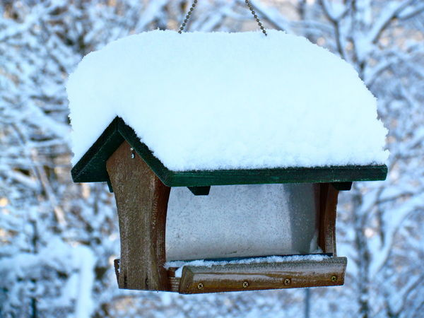 Absence Birdfeeder Change Day Empty Feedthebirds Obsolete Outdoors Park - Man Made Space Protection Season  Snowybirdfeeder Tree Tree Trunk Wood Wood - Material Wooden