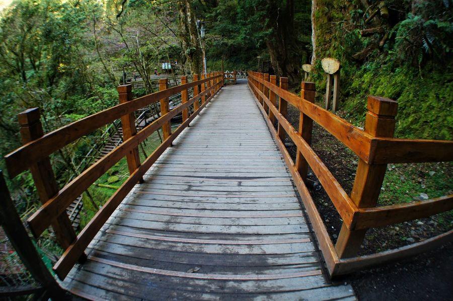 恩愛農場 Tree Nature Outdoors Railing No People Wood - Material Day Tranquility Beauty In Nature 臺灣 Nature