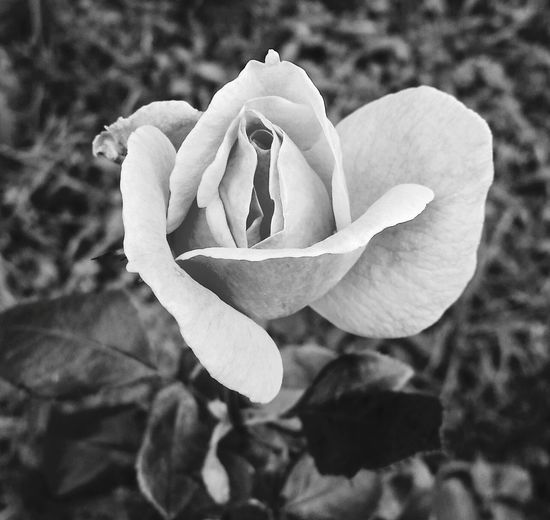 Learn & Shoot: Simplicity Nature_collection Natural Life Nature Efforts Semplicity B&w B&w Nature Monochrome Photography