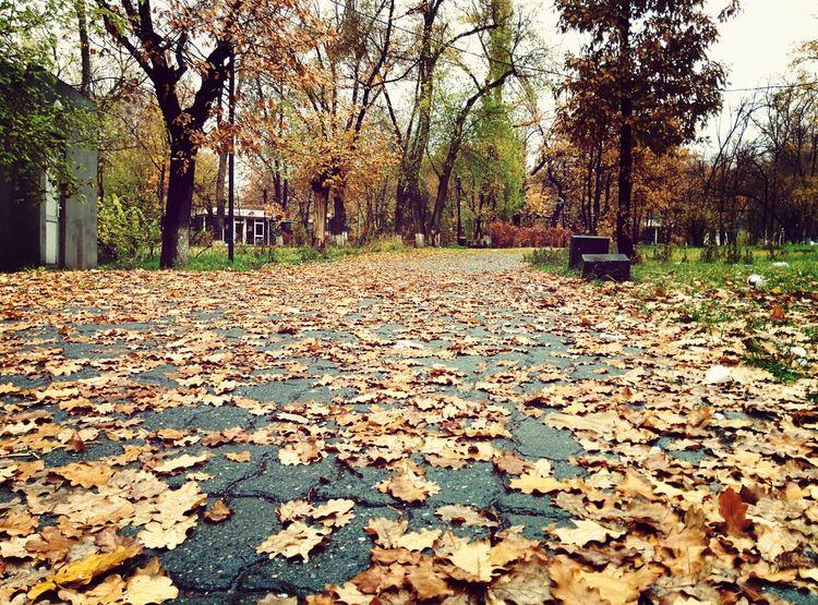 Autumn Park Leaf 🍂 EyeEm Nature Lover