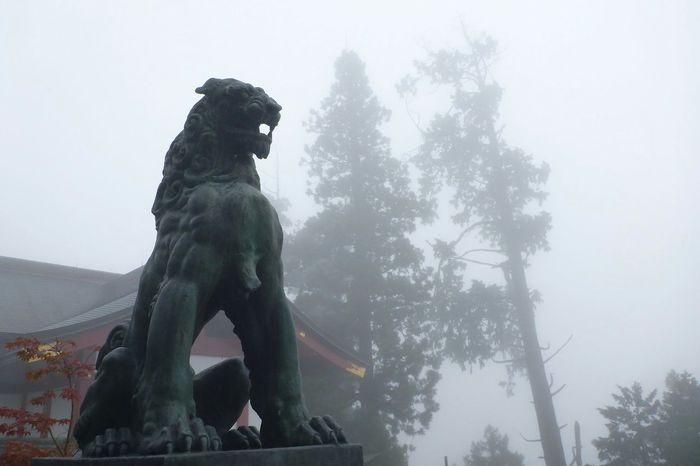 狛犬 Taking Photos Japanese Temple Japanese Traditional From My Point Of View EyeEm Best Shots Foggy Day