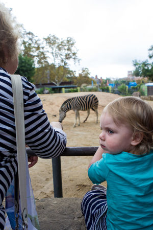 Baby Babygirl Casual Clothing Day Elementary Age Focus On Foreground Infant Leisure Activity Lifestyles Looking Mammal Outdoors Person Relaxation T-shirt Toddler  Tree Zebra Zoo My Niece Cute Beautiful Nature