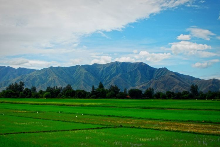 Landscape Landscape_Collection Remote Travel Philippines Mountain Non-urban Scene Province Roadtrip Field Green Rice Field Road Side View Nature Nature Photography