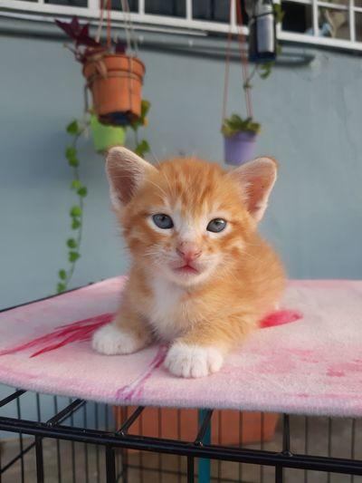 Portrait of ginger cat on floor